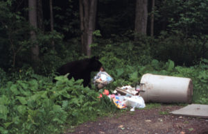 bear in trash1
